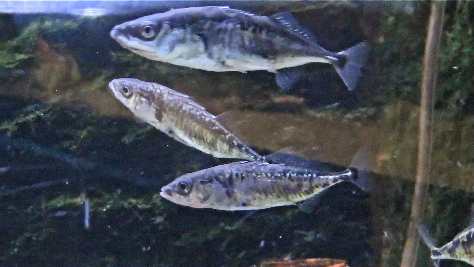 Vissen Voor Klein Zeewater Aquarium  Koop laag geprijsde dutch set partijen u2013 groothandel